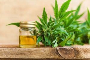 Hợp chất Cannabinoid là gì?